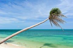 在海滩的椰子树 免版税库存照片