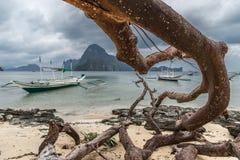 在海滩的死的树与在海滩海的分支在台风以后在El Nido,巴拉旺岛的多云剧烈的天 免版税库存照片