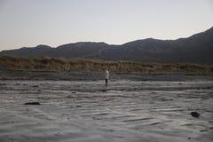 在海滩的沙丘 免版税库存图片