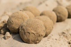 在海滩的沙子球 免版税库存图片