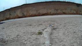 在海滩的沙子美人鱼 影视素材