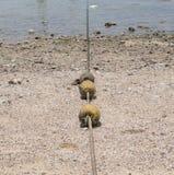 在海滩的浮体 免版税库存图片