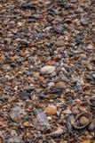 在海滩的海壳在Tybee海岛上 库存图片