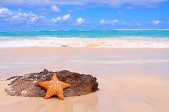 在海滩的海星。 库存图片