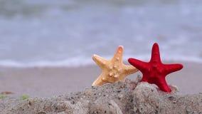 在海滩的海星 影视素材