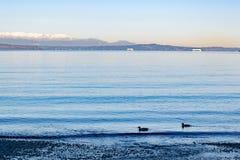 在海滩的清早在普吉特海湾 库存图片