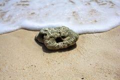 在海滩的湿石头,洗涤由波浪和白色泡沫 在一个晴朗的海滩的一个小卵石 免版税图库摄影