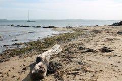在海滩的漂泊木头与帆船在背景中 库存图片