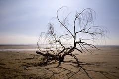 在海滩的漂流木头分行 库存照片
