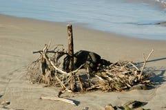 在海滩的漂流木头和岩石装饰 库存照片