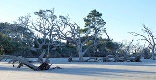 在海滩的漂流木头树 库存照片