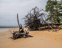 在海滩的漂流木头 在Nai杨海滩, Sirinath国民同水准 免版税图库摄影