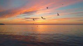 在海滩的热带日出 Cloudscape和鸟在海 股票录像