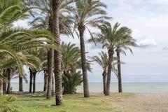 在海滩的热带棕榈树 库存照片