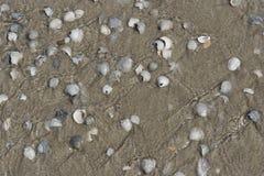 在海滩的特塞尔壳 库存图片