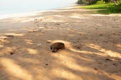在海滩的狗 免版税库存图片