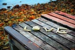 在海滩的珊瑚爱 图库摄影