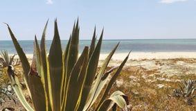 在海滩的离开的灌木有海视图 免版税库存图片