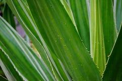 在海滩的绿色仙人掌 免版税图库摄影