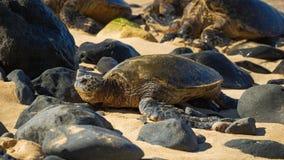 在海滩的绿色seaturtle,毛伊, Hawai `我 库存图片