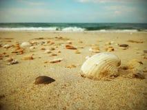 在海滩的美丽的贝壳 免版税库存图片