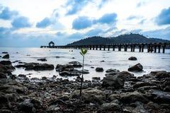 在海滩的美洲红树 免版税图库摄影