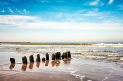 在海滩的老木groyne 免版税库存图片