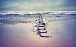 在海滩的老木groyne 库存图片