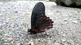 在海滩的蝴蝶 免版税库存照片