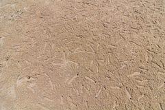 在海滩的螃蟹漏洞 免版税库存图片