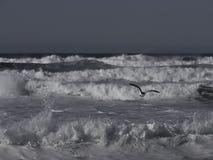在海滩的许多波浪 库存照片
