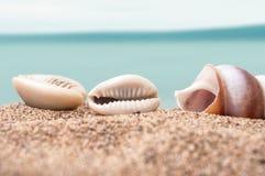 在海滩的贝壳与背景的蓝色海洋 库存图片