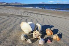 在海滩的贝壳巴伊亚德洛斯安赫莱斯,下加利福尼亚州,墨西哥 免版税库存照片