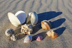 在海滩的贝壳巴伊亚德洛斯安赫莱斯,下加利福尼亚州,墨西哥 库存图片