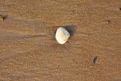 在海滩的贝壳背景&背景 库存图片