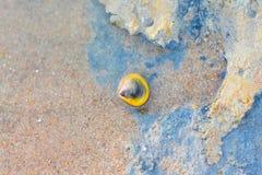 在海滩的贝壳背景&背景 免版税库存照片