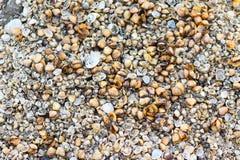 在海滩的贝壳背景&背景 免版税库存图片