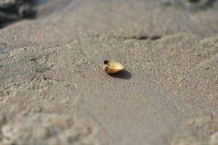 在海滩的贝壳背景&背景 图库摄影