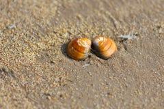 在海滩的贝壳背景&背景 免版税图库摄影