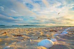 在海滩的贝壳,打开在太阳之前 在白色沙子的许多壳 免版税库存图片