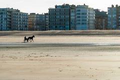 在海滩的赛马训练 图库摄影