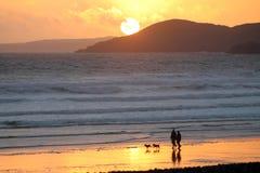 在海滩的走的狗 库存照片