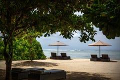 在海滩的遮阳伞和太阳懒人在异乎寻常的树下 免版税库存照片