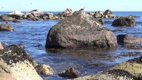在海滩的野生生物 影视素材