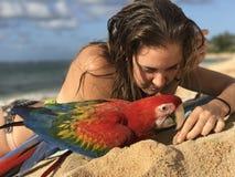 在海滩的金刚鹦鹉鹦鹉 免版税库存图片