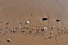 在海滩的金黄沙子的五颜六色的海壳在沙特阿拉伯 库存照片