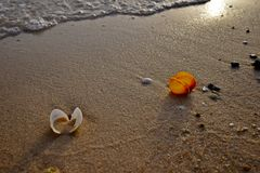 在海滩的金黄沙子的五颜六色的海壳在沙特阿拉伯 免版税库存图片