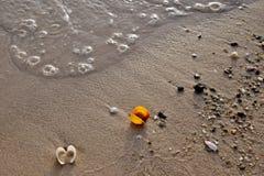 在海滩的金黄沙子的五颜六色的海壳 免版税库存照片