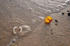 在海滩的金黄沙子的五颜六色的海壳 免版税库存图片