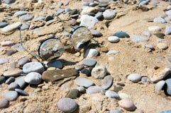 在海滩的镜子太阳镜 免版税库存图片